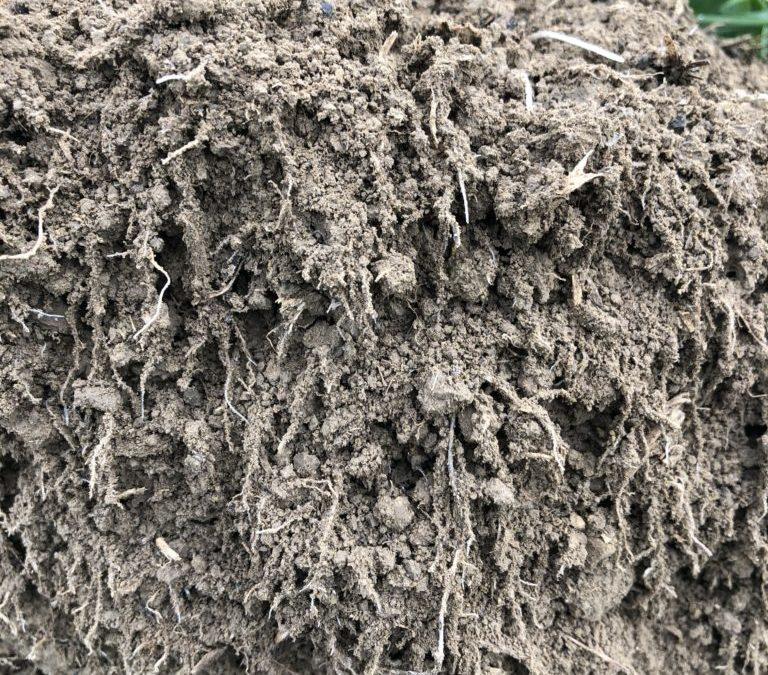Einsteiger-Seminar Bodenfruchtbarkeit