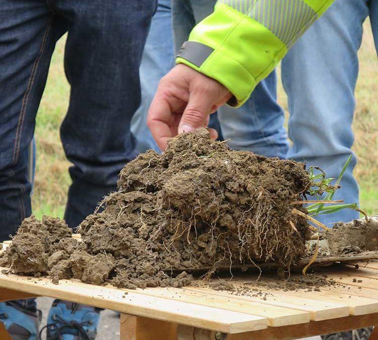 Wir haben verstanden: 2. Einsteiger-Seminar Bodenfruchtbarkeit!