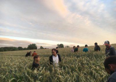 Feldtage – Innovative Landwirtschaft Reber