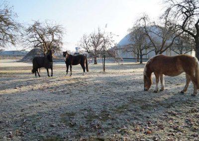 Tiere und Reitschule – Innovative Landwirtschaft Reber